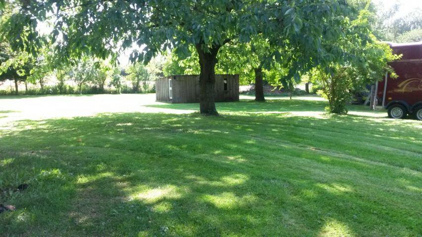 Großer schattenspendender Wallnussbaum