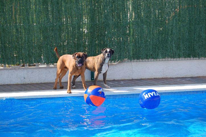 Urlaub mit Hund bei Delta Chalets