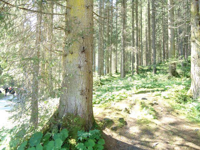 viel Wald rund herrum