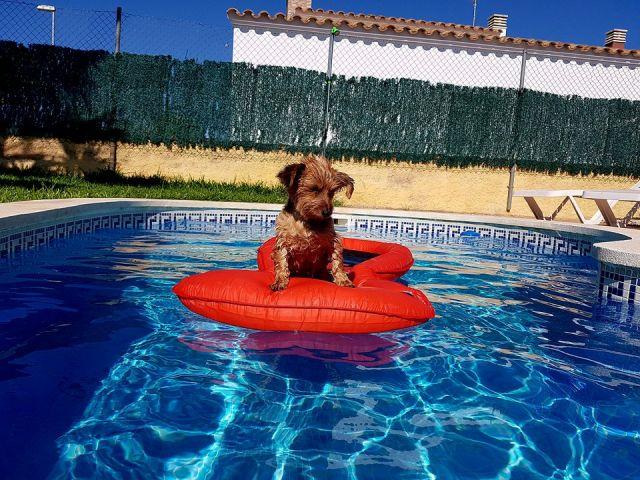 Traumvilla mit Hund
