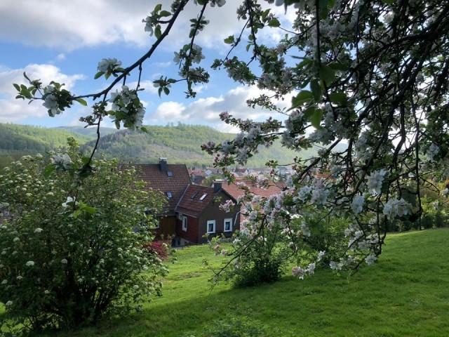 Garten mit Blick aufs Haus