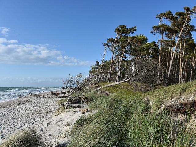 Die Natur an der Ostsee