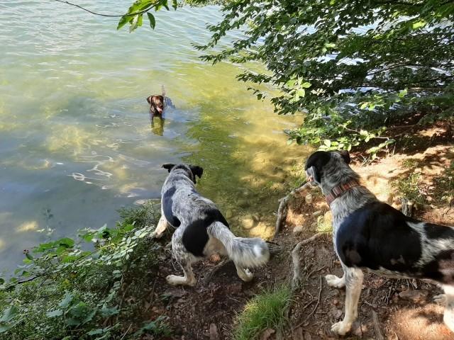Langbürgener See/Eggstätter Seenplatte