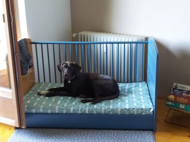 Hundebett Test und für gut befunden:-)