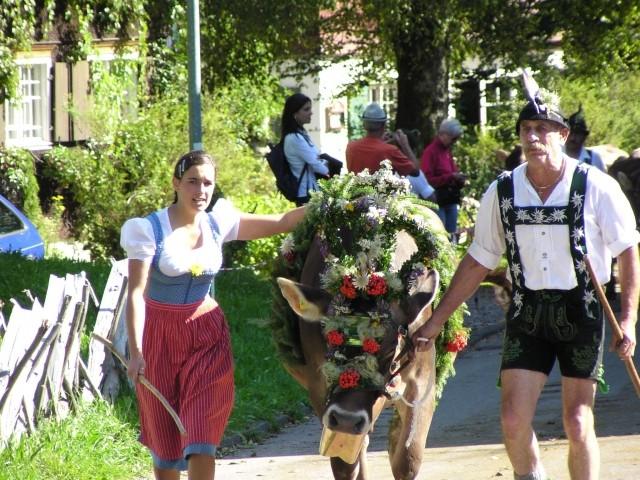 Tradition: Einer der legendären Viehscheide in Oberstaufen und der Umgebung