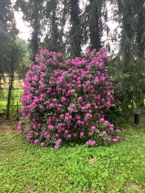 Im Frühling blühen dort viele Blumen und Sträucher