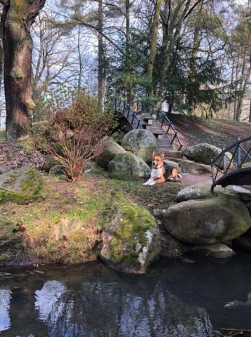 Schlosspark Oranienbaum