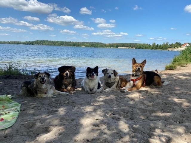 Hundestrand am Bergwitzsee