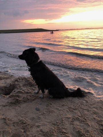 Sonnenuntergang Dangast Juli
