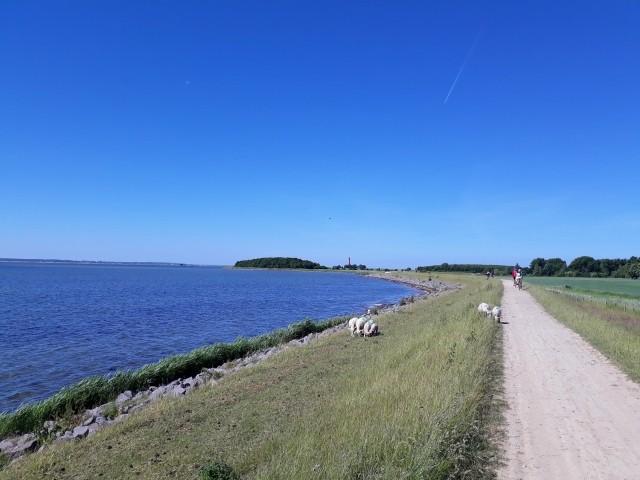 Radtouren auf den Fahrradwegen in Orth