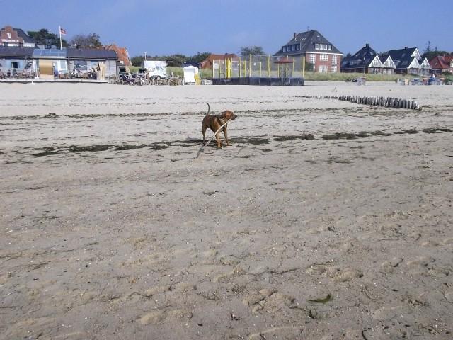 Die Vierbeiner werden ihren Spaß am Strand haben
