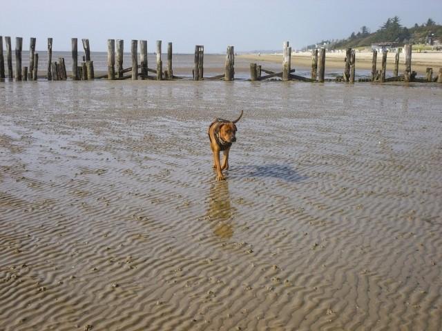Ein Spaziergang am Strand wird zur Entdeckungstour