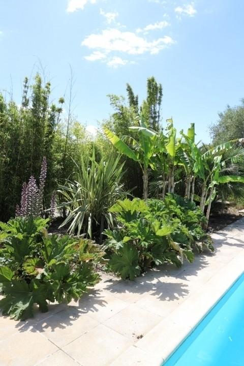 Tropische Pflantzen im Garten