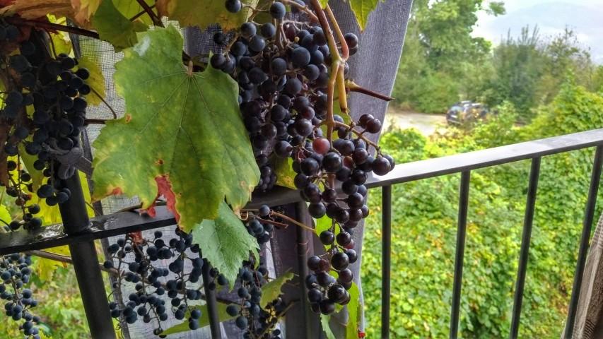 Den Wein direkt am Balkon verkosten