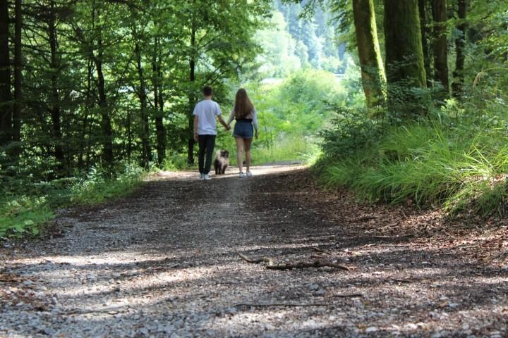 Auf dem Weg zum Silbersee mitten im Wald