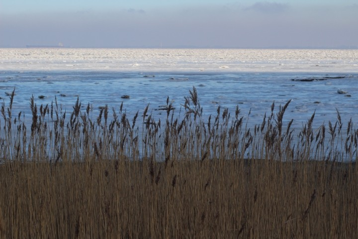 vereiste Nordsee
