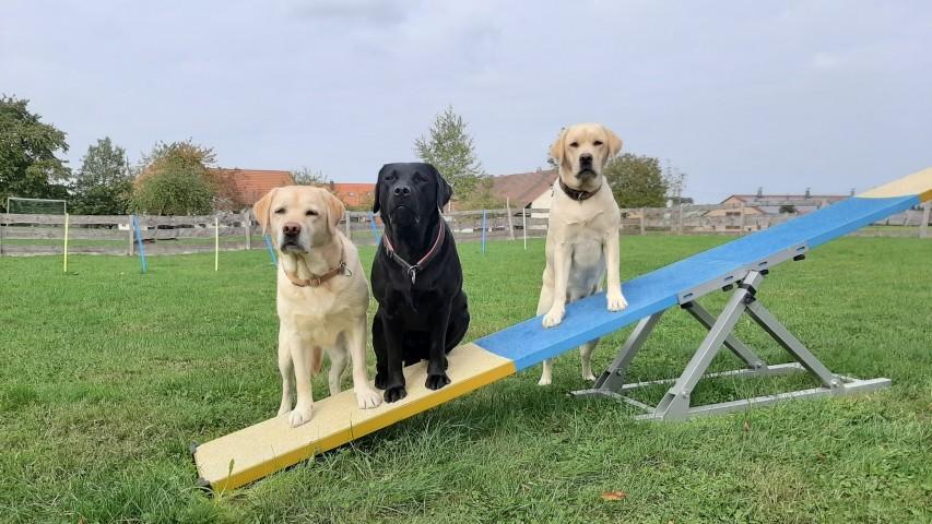 Hier sind Hunde wirklich herzlich willkommen!