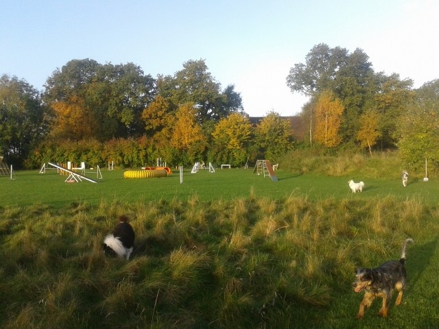 Agilityparcours mit Hundespielwiese