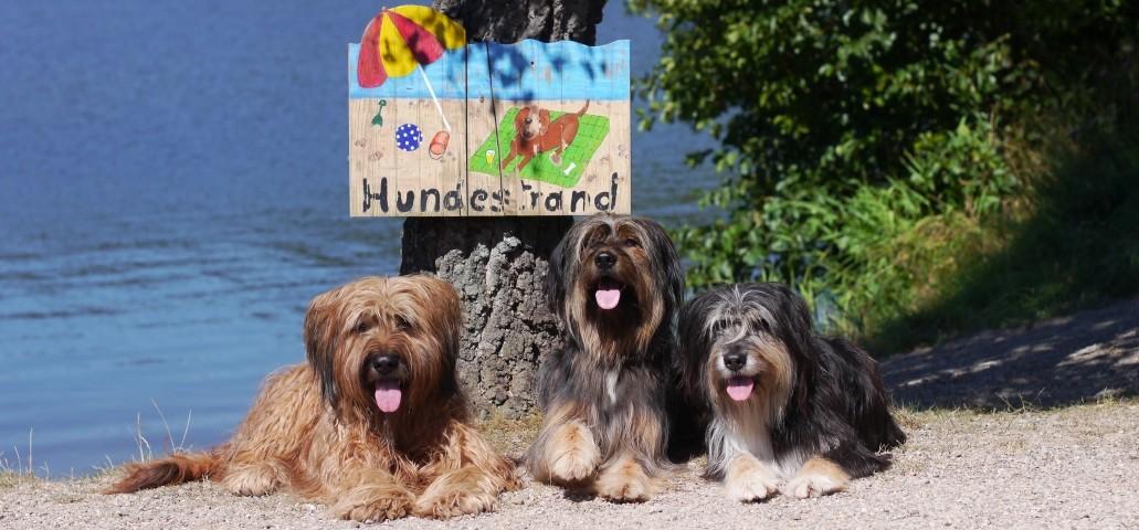 Hundestrand am Badeteich bei Teichmann