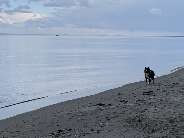 Impression Hunde am Strand