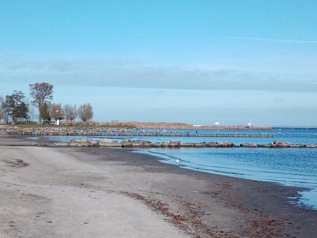 Haff- Strand mit Hundestrand