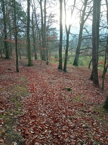 ...und ganz viel Wald, Natur pur
