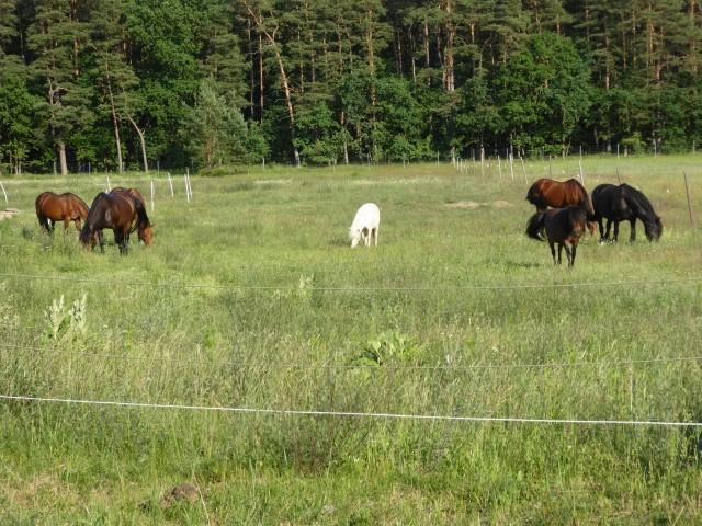 unsere Pferde und Ponys