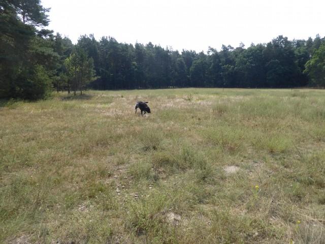>1 ha Hundefreilauf (Zaunhöhe 1,60m)