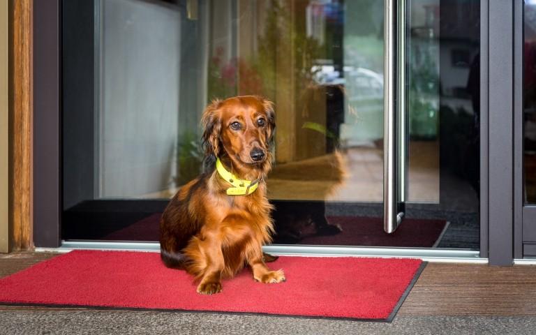 Ferienwohnung Sun Apart: Dackeldame Hexl freut sich auf Hundegesellschaft und ist sehr freundlich und geduldig!