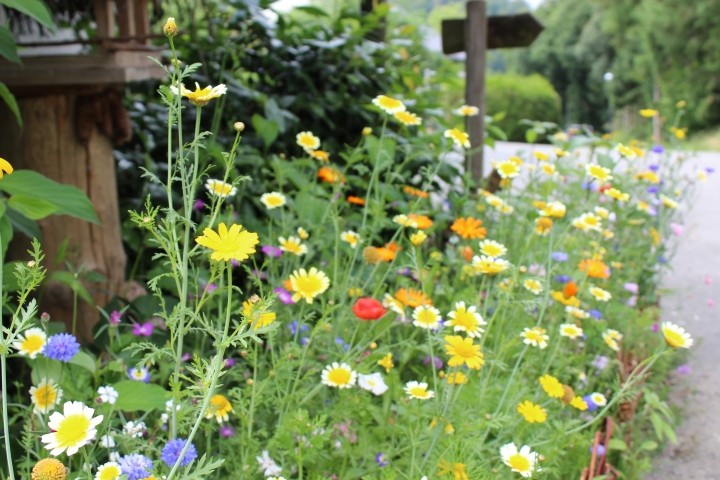 Kleine Bienenwiese vor dem Haus