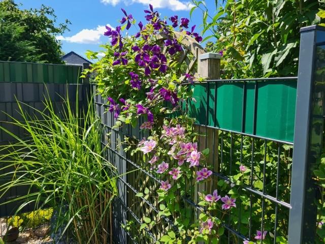 Gartenzaun mit Blüten