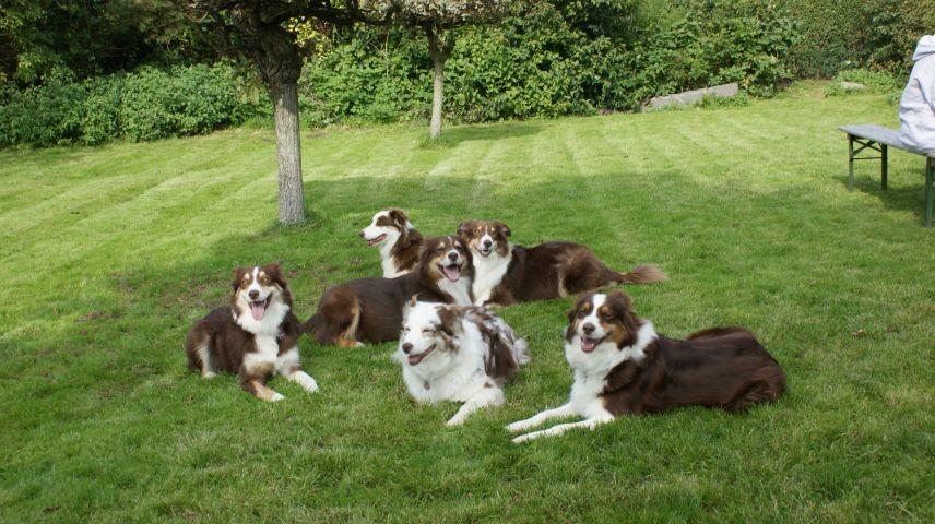 umlaufend eingezäunter gepflegter Hundegarten