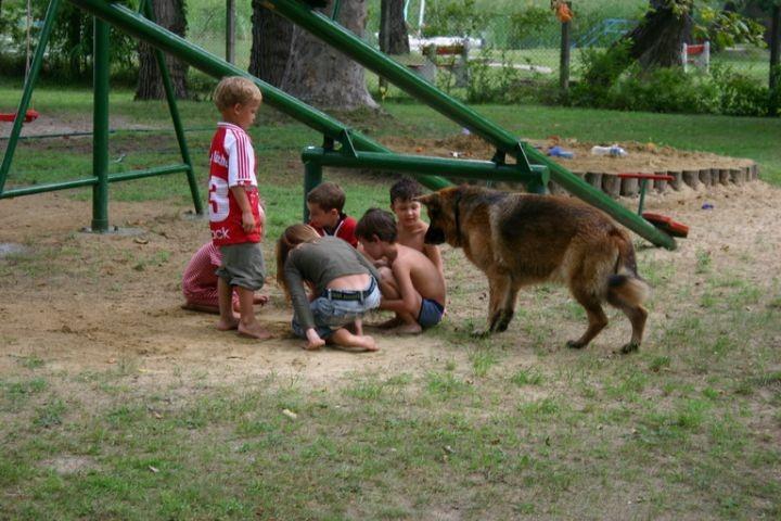 Hund spielt mit den Kindern