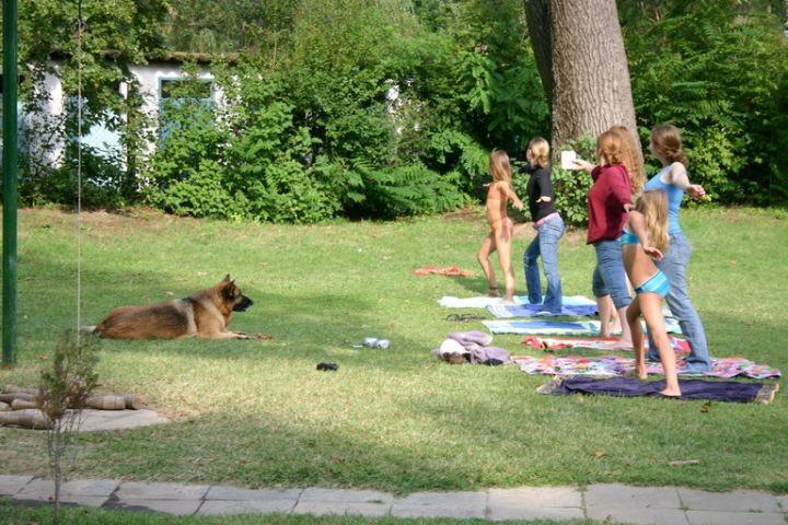 Hund kommentiert die Morgengymnastik