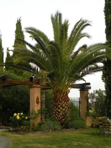 Garten zur Privatnutzung der Gäste