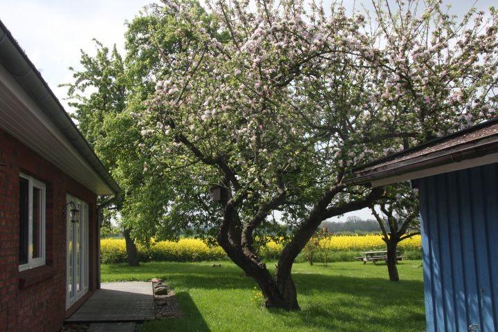 blühende Obstbäume im Frühjahr