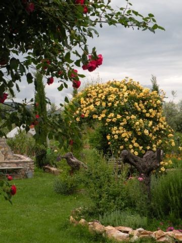 ringsherum nur Gärten und Olivenhaine, Weinberge
