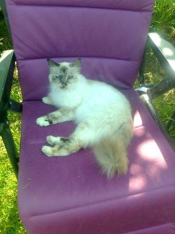 Katze Donna ganz relaxt