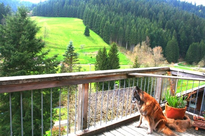 ferienhaus susanne mit eingezaunten garten With französischer balkon mit ferienhaus schwarzwald mit hund eingezäunter garten