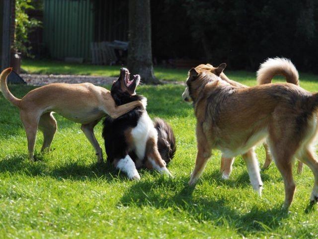 Hundespiele in unserem Garten