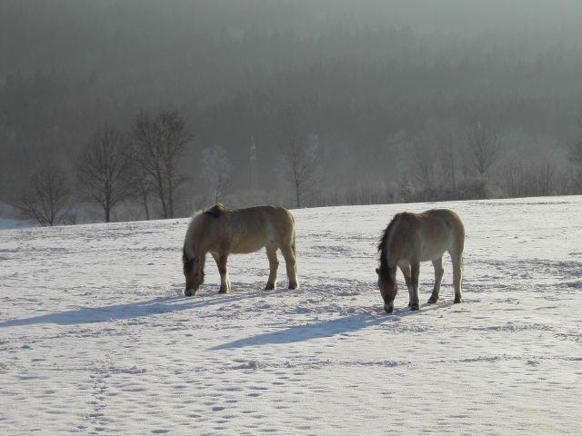Winterliche Umgebung von Moosbach