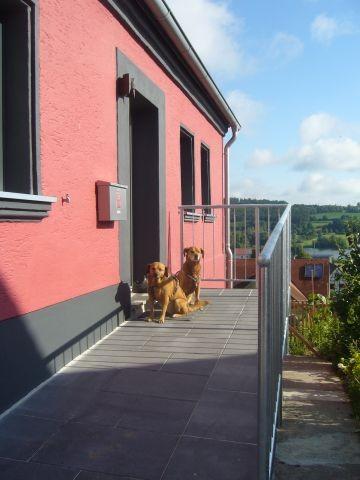 Hunde vor dem Haus