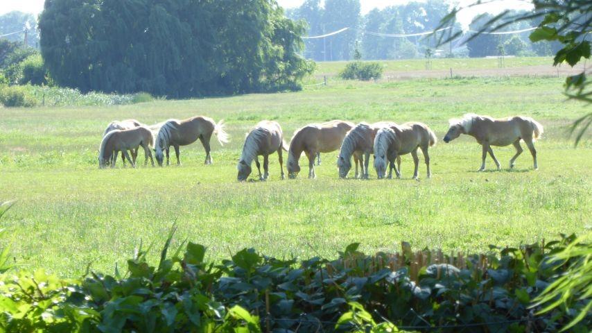 Blick von Terrasse auf Pferdeweide