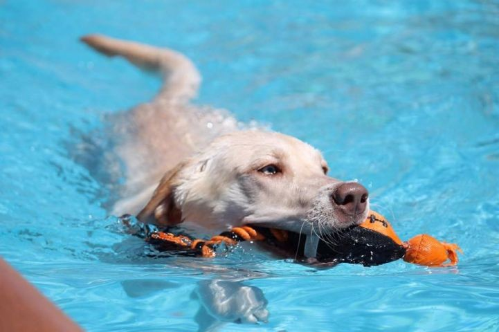Hunde dürfen auch mal in den Pool