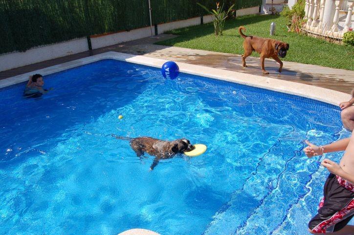 Hunde dürfen auch in den Pool