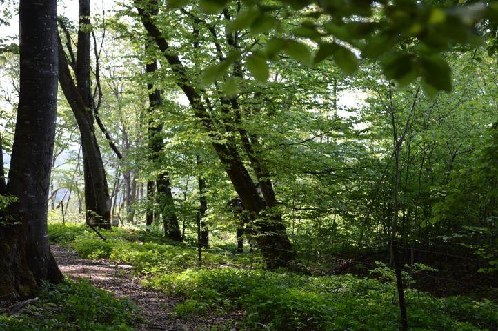 Buchen- und Eichenwälder