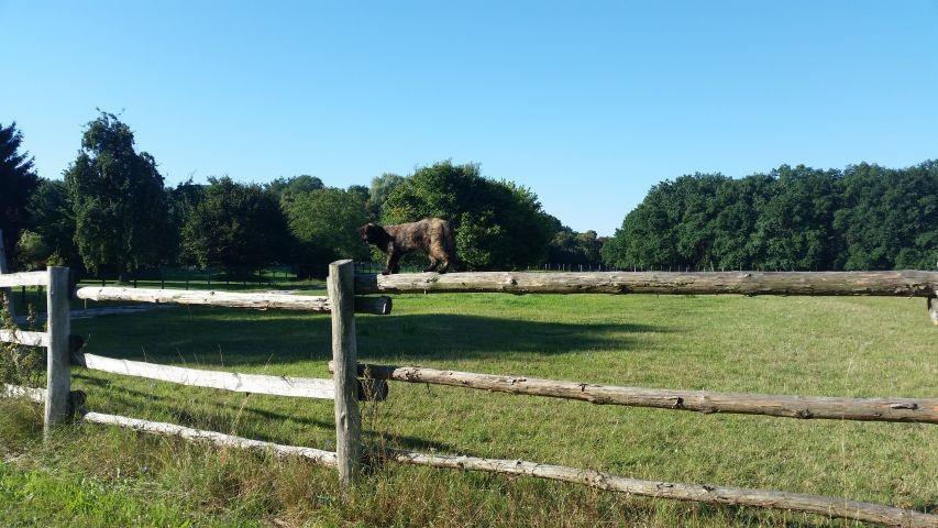 die Pferdekoppel unserer Nachbarn