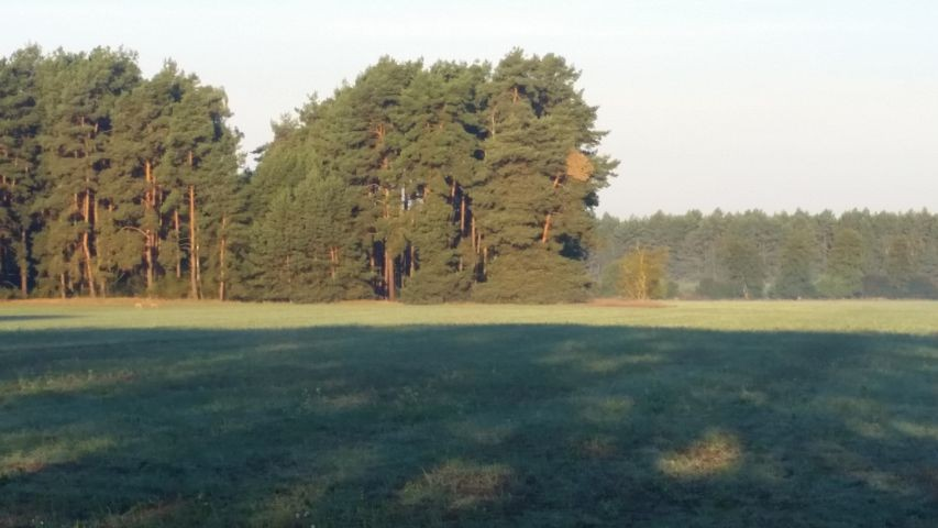 Lange Spaziergänge und Freilauf auf den Felder und Wiesen sind wunderschön.