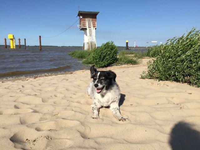 Direkt am Hunde- und Badestrand