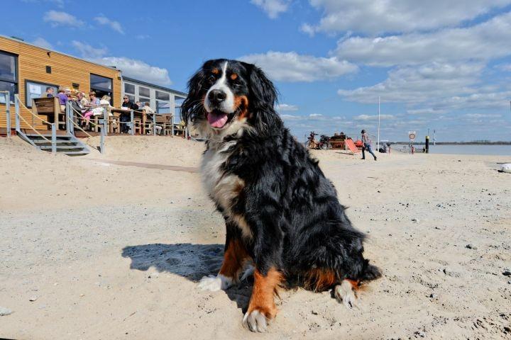 Optimal für den Hundeurlaub
